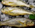 (4kg)新鲜冷冻野生东海小黄花鱼